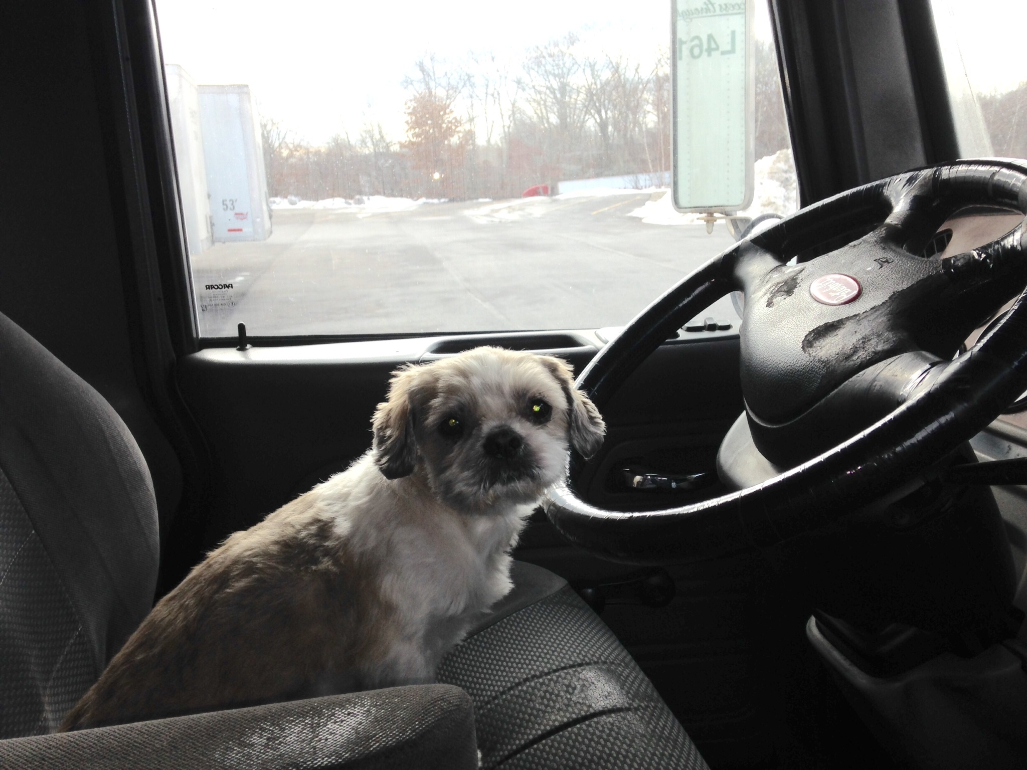 How pets enhance life for people with CDL trucking jobs