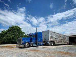 Dustin Nesbitt hauling livestock