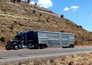 cattle hauler