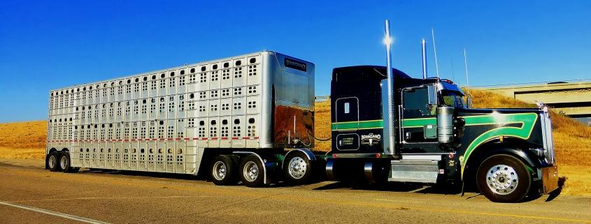 hauling livestock
